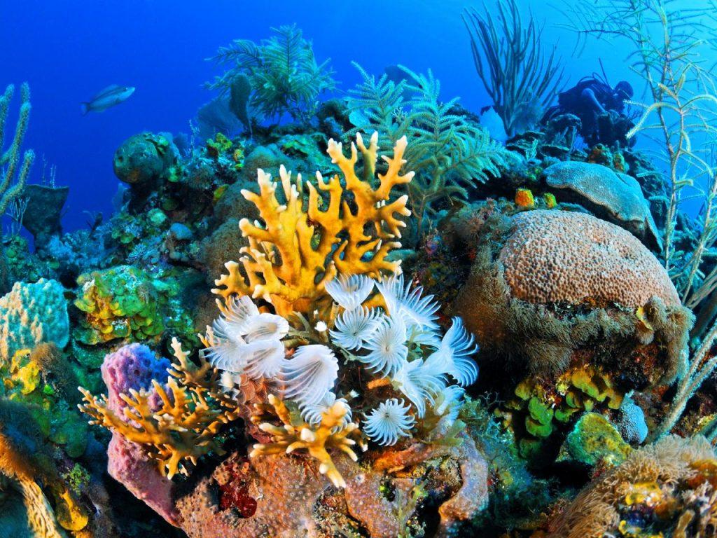 Phát hiện các rạn san hô mới tại vùng biển Caribbean